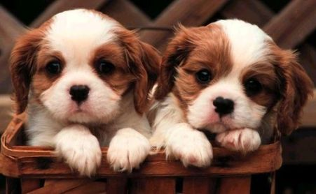 Here is a picture of puppies instead!