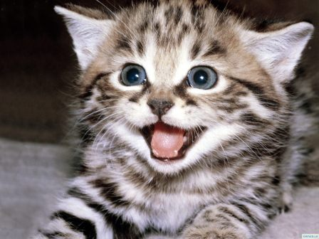 But even I will concur that this is a cute kitty.